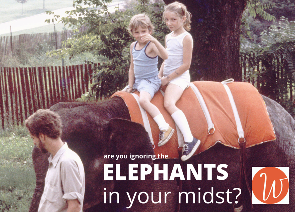 Please Feed the Elephants